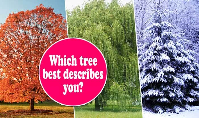WHICH TREE BEST DESCRIBES YOU?