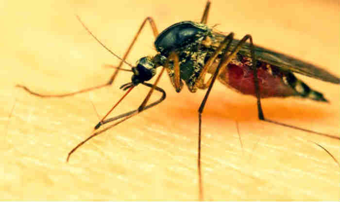 Lady constable dies of dengue in Ghaziabad, 60 tested positive