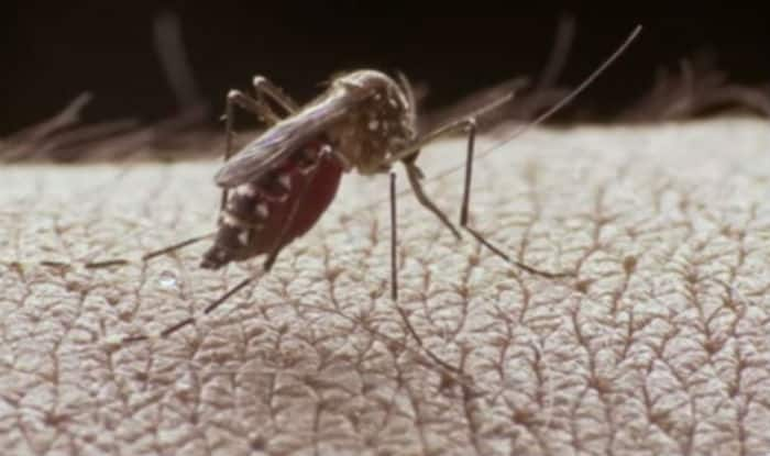 This video will educate you about Dengue virus infection
