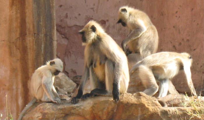 Monkeys see visual illusions like humans