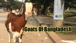 Forget Humans of New York! Facebook page 'Goats of Bangladesh' guarantees laughter