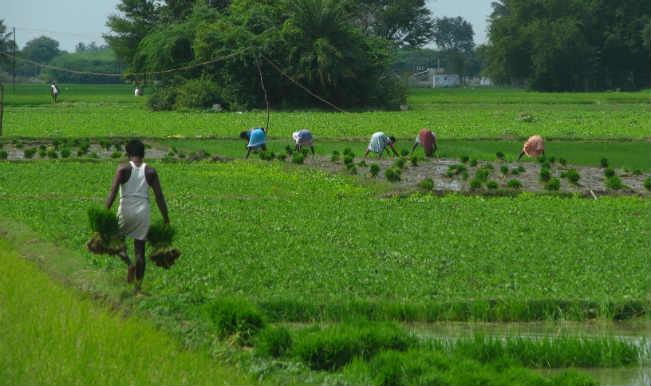 Heavy rains lash Punjab at harvest time