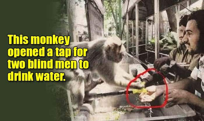 Wow! This monkey helping two blind men drink water will leave you with a smile – See Pic