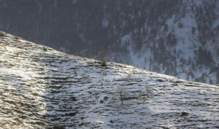 Higher reaches in Kashmir Valley witness season's first snowfall