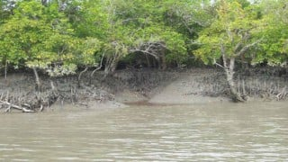 Sea level rise no threat to Sundarbans, claims new research