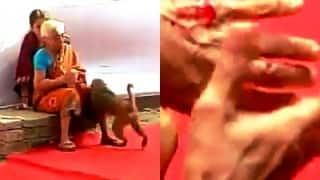 Monkey Menace: Animal bites and scares people in polling booth in Bakhtiarpur, Bihar