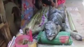 Weird! Half Buffalo-Half Crocodile found in Thailand! Is it real? (Watch video)