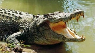 Mom Blocks Crocodile's Nose With Her Fingers to Save Toddler, Says She Learned it From Elders