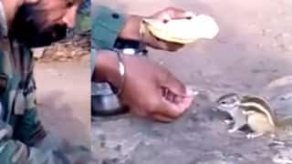 Watch the heartwarming video of Indian soldier feeding hungry squirrel!