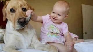 Dogs tolerate irritating babies (Video compilation)
