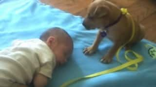 Too cute! Sleepy puppy falls asleep on baby, gets 20 million views on YouTube (Video)