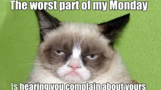 21 Grumpy Cat memes you can relate to every Monday of your life