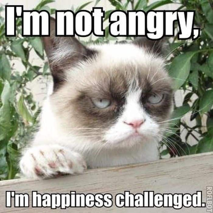 21 grumpy cat memes to instantly make you grumpy however