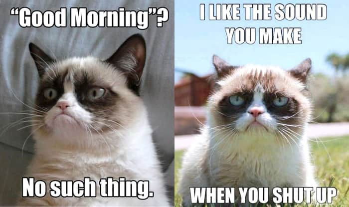 PicMonkey Collage 21 grumpy cat memes to instantly make you grumpy however happy you