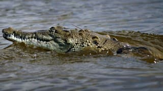 Bhitarkanika National Park Open to Travellers After a 3-Month Hiatus