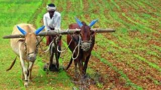 Bihar: मानसून ने किसानों की जगाई आस, धान की रोपाई में हुआ इजाफा