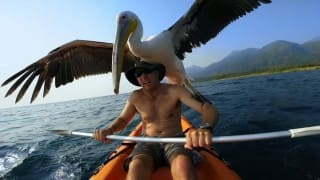 GoPro camera story: Pelican learns to fish! (Video)