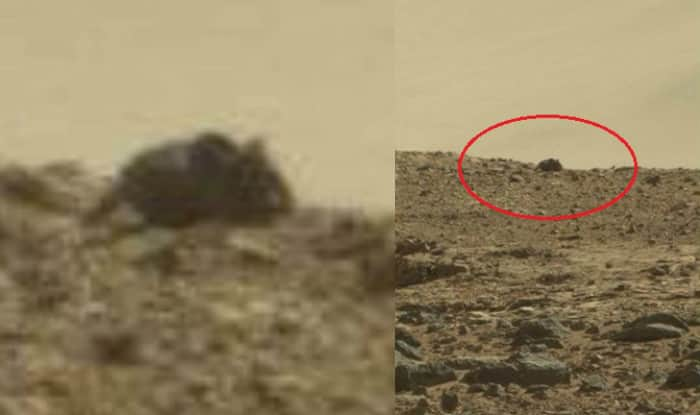 Image Gallery mouse found on mars