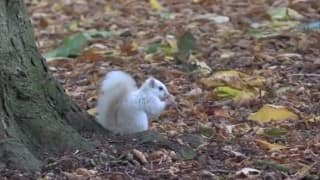 Ever seen an all-white squirrel? Check it out! (Video)
