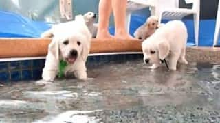 Puppies getting their first ever swimming lesson will make you grin!