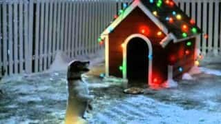 It's Christmas season and what this doggie does for Santa is amazingly sweet!