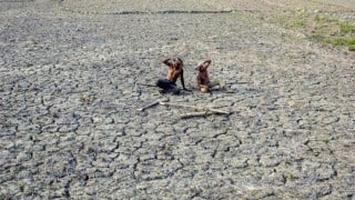 Rs 2536 crore given to drought-affected farmers: Maharashtra Government