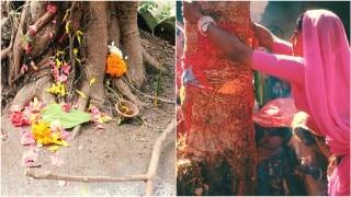 जानिये किस पेड़ में कौन-से देवता करते हैं निवास?