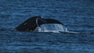 New Zealand and Australia lead Japan whaling protest