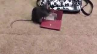 OMG! This rat steals money from a ladies purse (Watch Video)