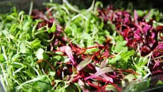 The Importance of Adding Microgreens to Your Daily Diet