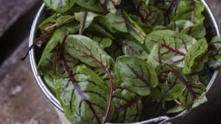 Everything You Need to Know About the Latest Health Trend: Red Ribbon Sorrel