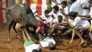 Jallikattu: All you need to know about the bull-taming festival in Tamil Nadu