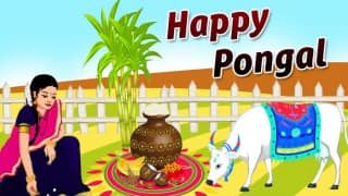 Pongal 2017: Importance and Significance of the 4 day traditional South Indian harvest festival is celebrated in Tamil Nadu