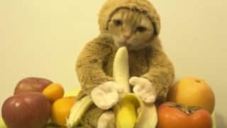 This cat wearing a monkey suit and licking a banana is the cutest thing ever!