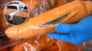 3000 fake carrots used to smuggle more than a ton of drugs across border!