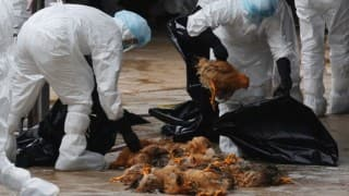 Bird flu case confirmed in eastern Scotland