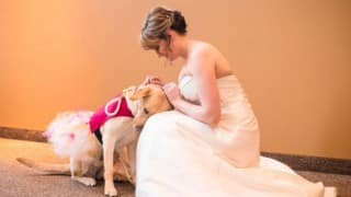 Service dog comforts bride on wedding day