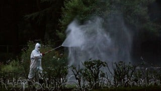 Malaysia recorded highest ever dengue deaths last year