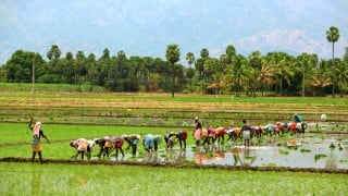 Farmers' children to observe fast on Independence Day
