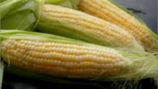 Government allows duty-free import of maize up to 5 lakh tonnes