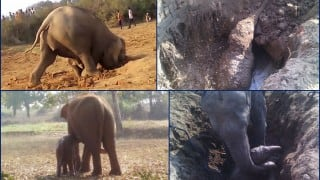 Heart-wrenching story of mother desperately trying to save baby elephant stuck in well for 11 hours! (Watch video)