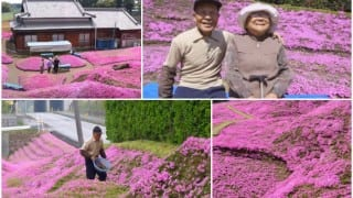 Touching love story of a man who planted thousands of pink blooms for his blind wife! (Watch video)