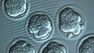 British scientists allowed to genetically modify human embryos
