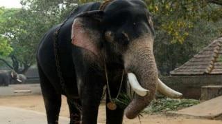 Man taking selfie attacked by elephant in Kerala