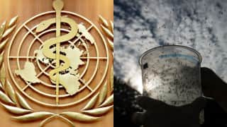 Zika virus: Test vaccines to tackle disease to take another 18 months, says WHO