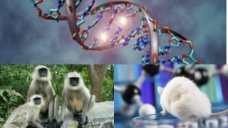 Potential Huntington's disease drug found effective in mice, monkeys
