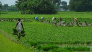 BKS demands transfer of subsidy directly to farmers' account