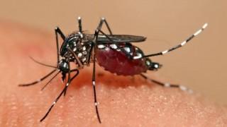 Vaccine against dengue virus is 100 percent effective: study