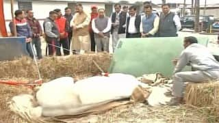 PETA calls for highest punishment for Shaktimaan's attackers