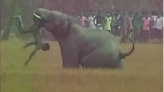 Elephant attacks villagers in West Bengal, throws man in air (Graphic video)